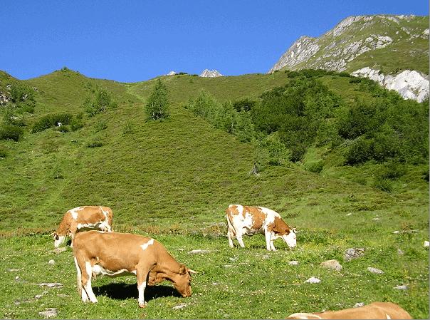 Foto - Biodiversität und Mensch im Alpenraum