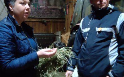 B2P020 Olga & Markus Voglauer (Biohof Kumer | Bio-kmetija pri Kumru) – Logische Landwirtschaft mit Jersey-Kühen und Direktvermarktung