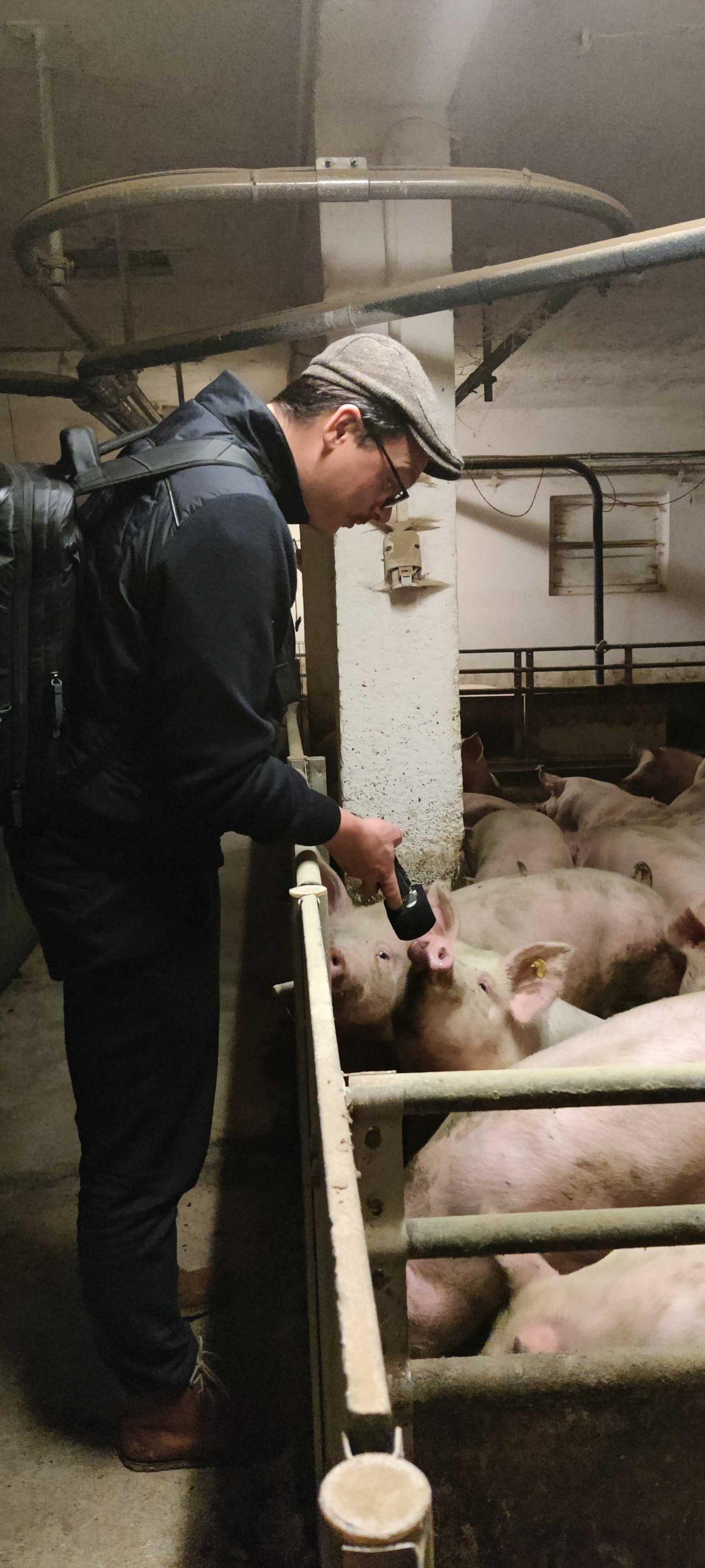 Willy im Schweinestall mit Podcast-Mikrofon