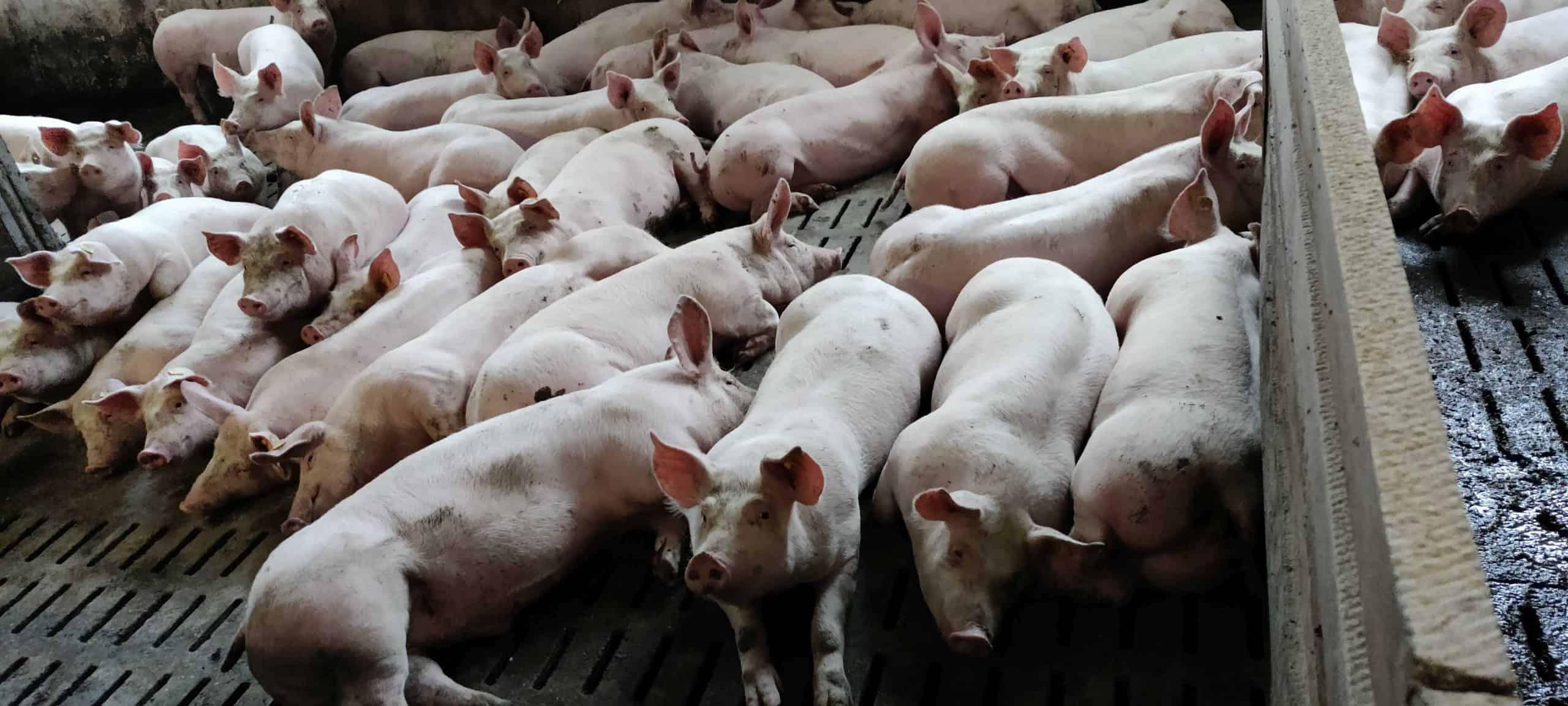 Foto - B2P023 Viktoria Eichinger & Familie - Ferkelaufzucht und Schweinemast