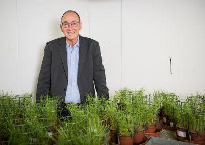 Urs Niggli in der Klimakammer mit Weizenpflanzen