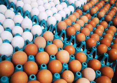braune und weiße Eier bei Schrall Eier