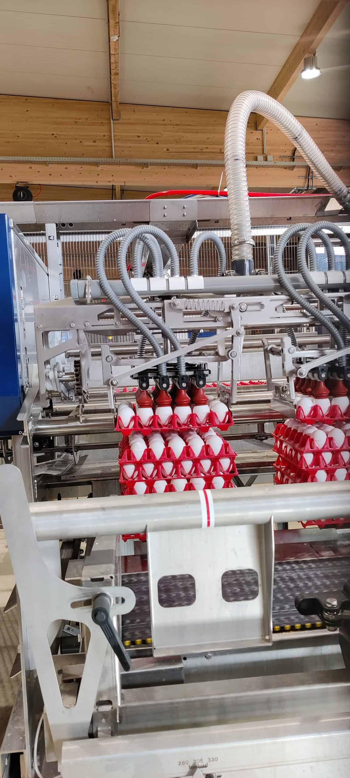 Hier werden rohe Eier sortiert bei Schrall Eier