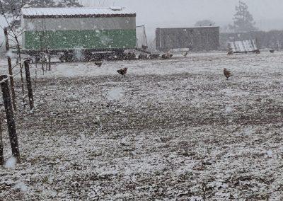 Freilauffläche mit Mobilstall bei Schneefall