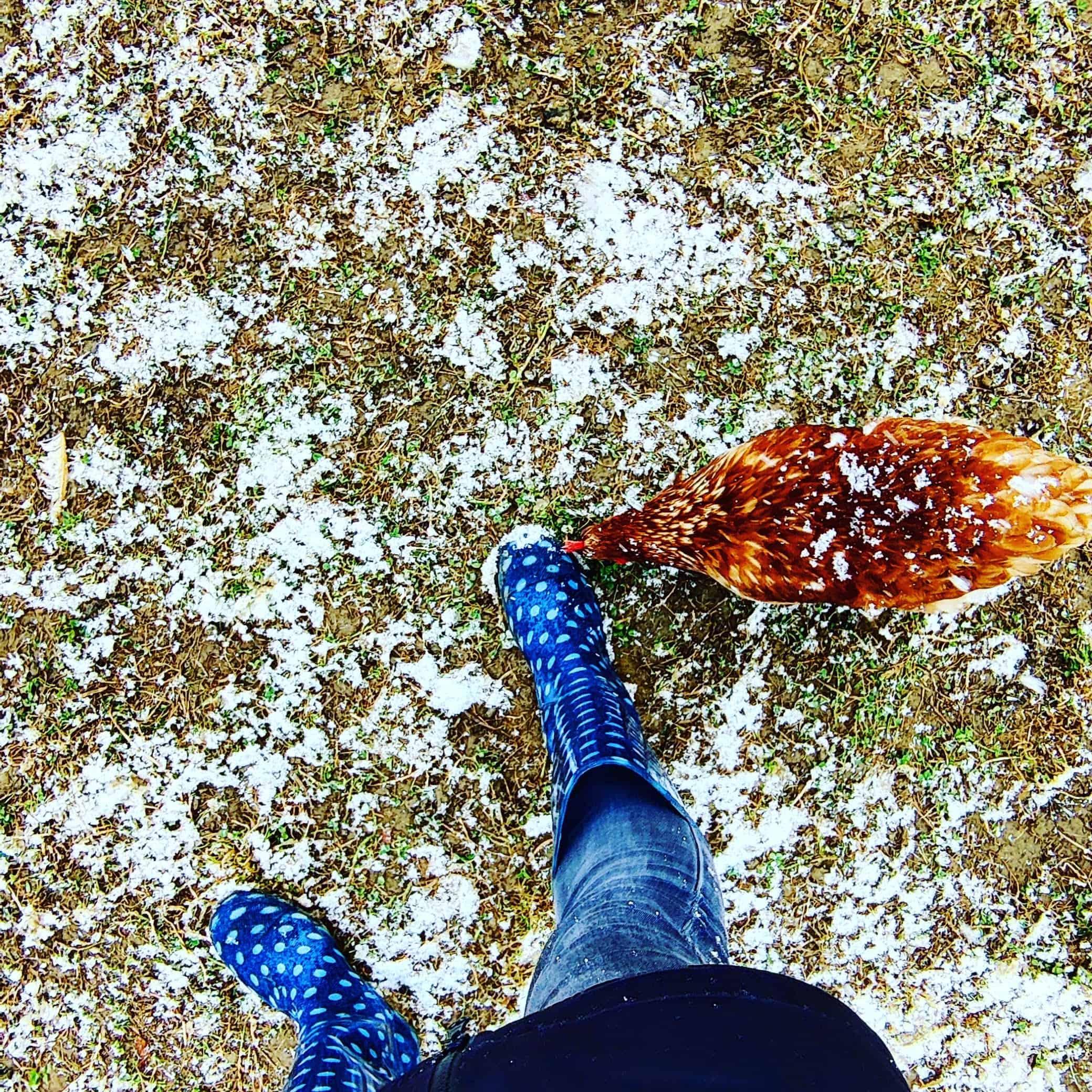 Melange von Gummistiefel und Huhn