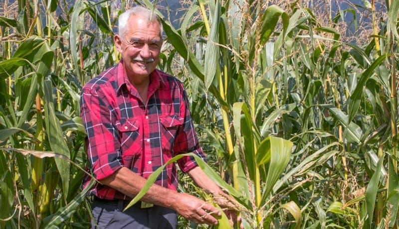 Sepp Brandstätter in seinem Maisfeld in Würmlach