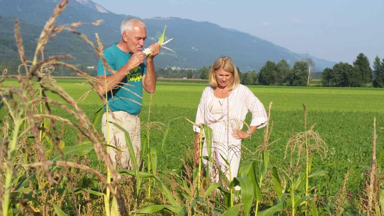 Sepp Brandstätter erklärt seine Arbeit auf seinem Maisfeld